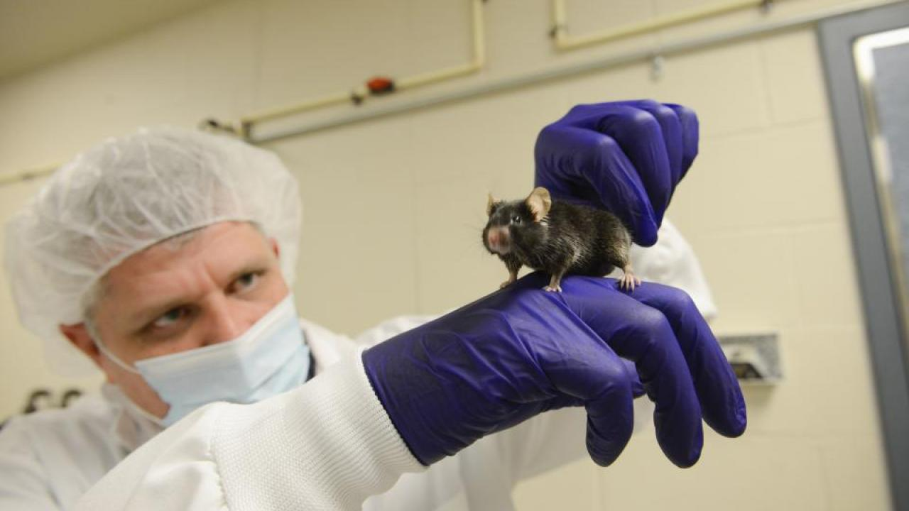 Jon Ramsey with the UC Davis School of Veterinary Medicine holds a mouse.